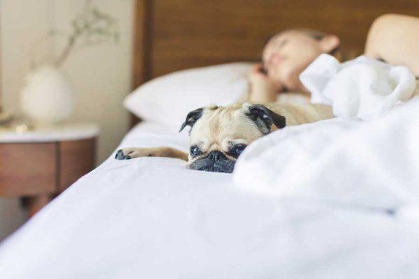 Materassi e Doghe: Guida all'Acquisto